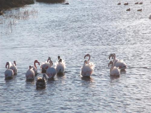 Flamingos at the salt plains